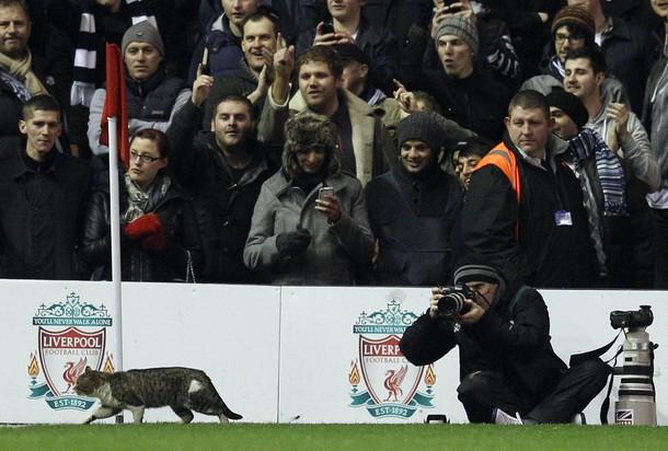 "Ливерпуль - Тоттенхэм 0:0 кот, вызвавший ажиотаж на ""Энфилд Роуд"""